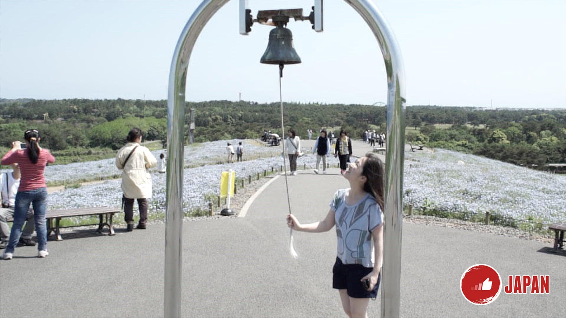 【貝遊日本】日本關東賞花花(三)日立海濱公園藍花海
