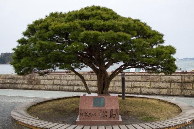 春.日本.東北.希望賞到櫻之旅.宮城縣.日本三景.松島(下)
