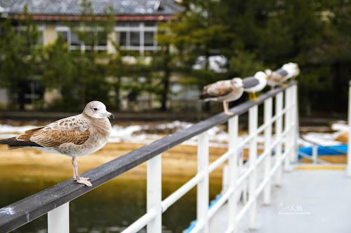 晚冬.日本.關西.日本三景天橋立、城崎溫泉