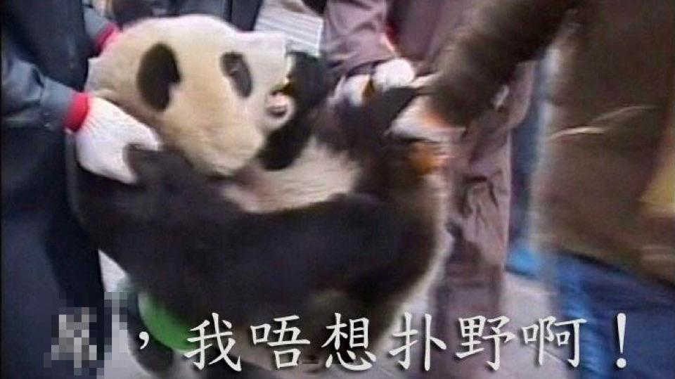 上野熊貓發情帶挈股價急上升?!
