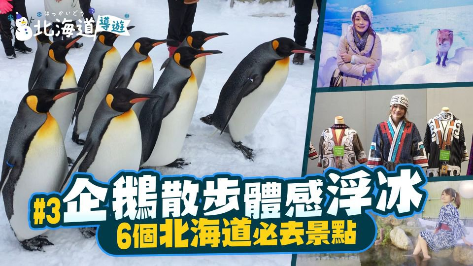 《北海道導遊》EP.3 企鵝散步 體感浮冰 6個北海道必去景點