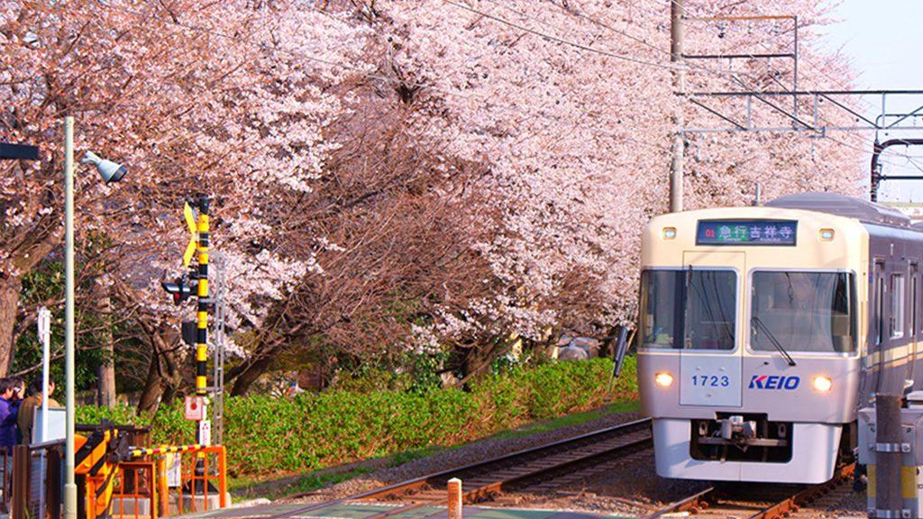 京王電鐵全新觀光套票 遊東京最高節省5成
