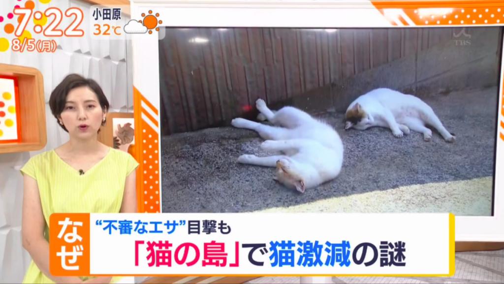 貓島「馬島」60隻貓大量死亡案 傳媒與動物保護團體追查 疑兇是島上居民?