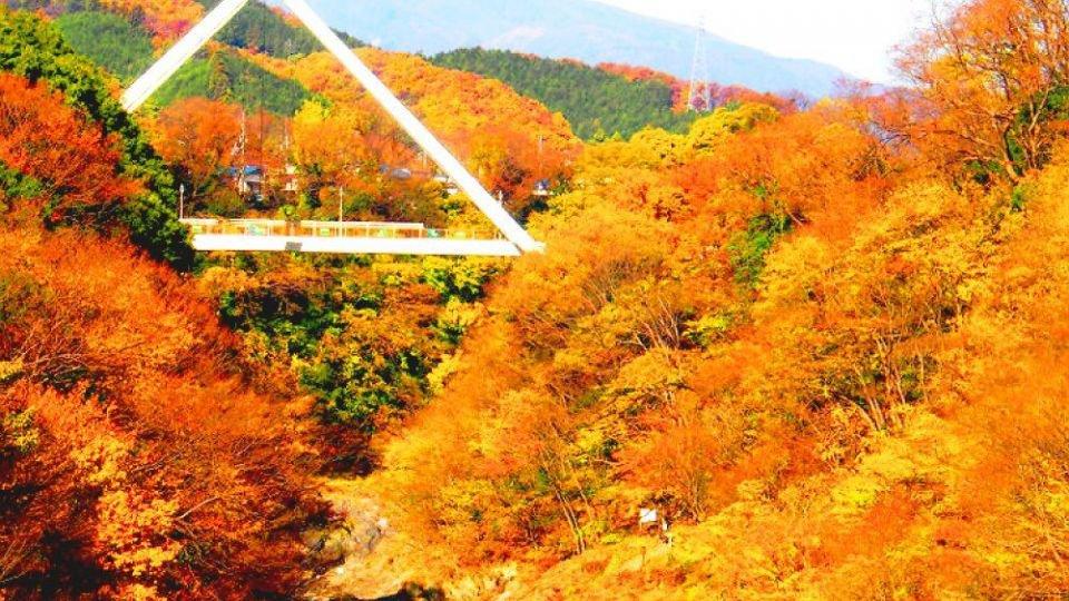 【日本紅葉2019】東京近郊 4個紅葉景點介紹