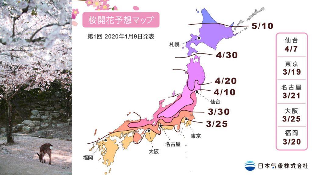日本櫻花2020年預測情報整合 開花日期+最佳觀賞時間