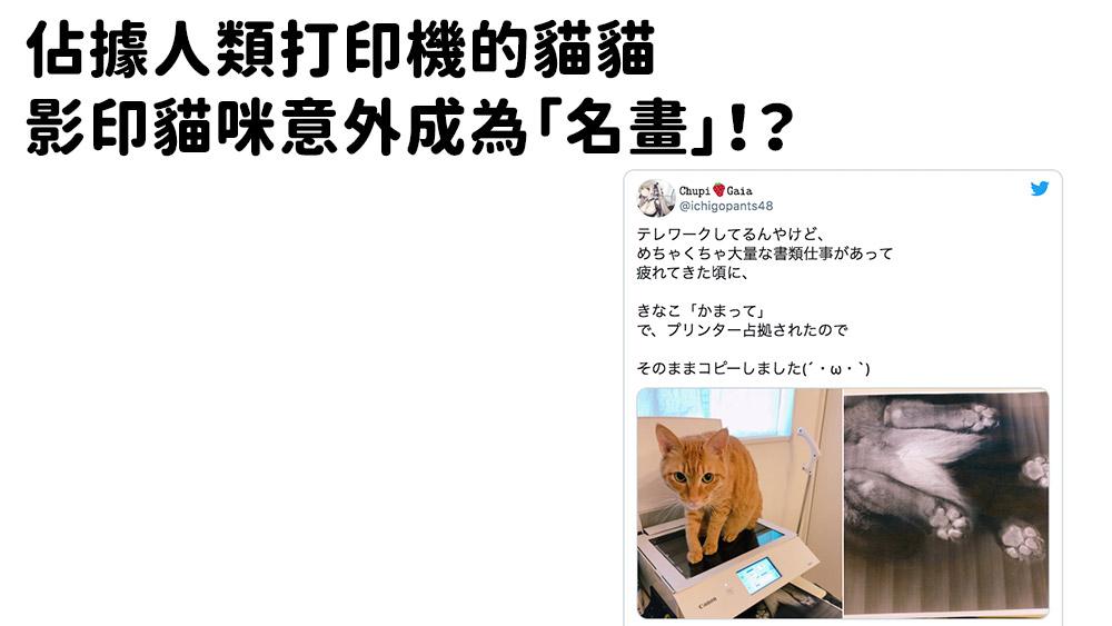佔據人類打印機的貓貓。影印貓咪意外成為藝術「名畫」!?