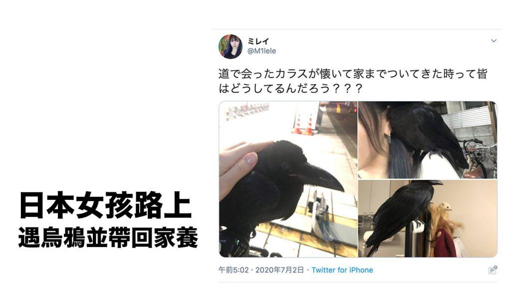 女孩路上遇烏鴉帶回家養 寵愛有加 備受日本網民關注